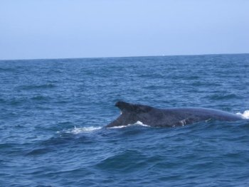 Whale Watching tour in Punta Mita