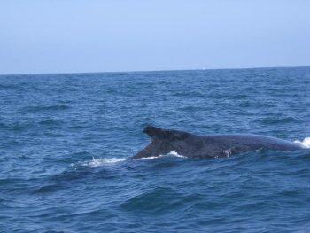 Whale Watching tour in Punta Mita