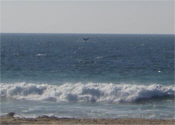 Whale Watching - Photo taken from Quinta Christileen